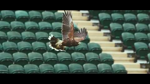 Rufus - The Real Hawk-Eye